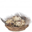 Quail egg nest, D7cm, H3,5cm, natural